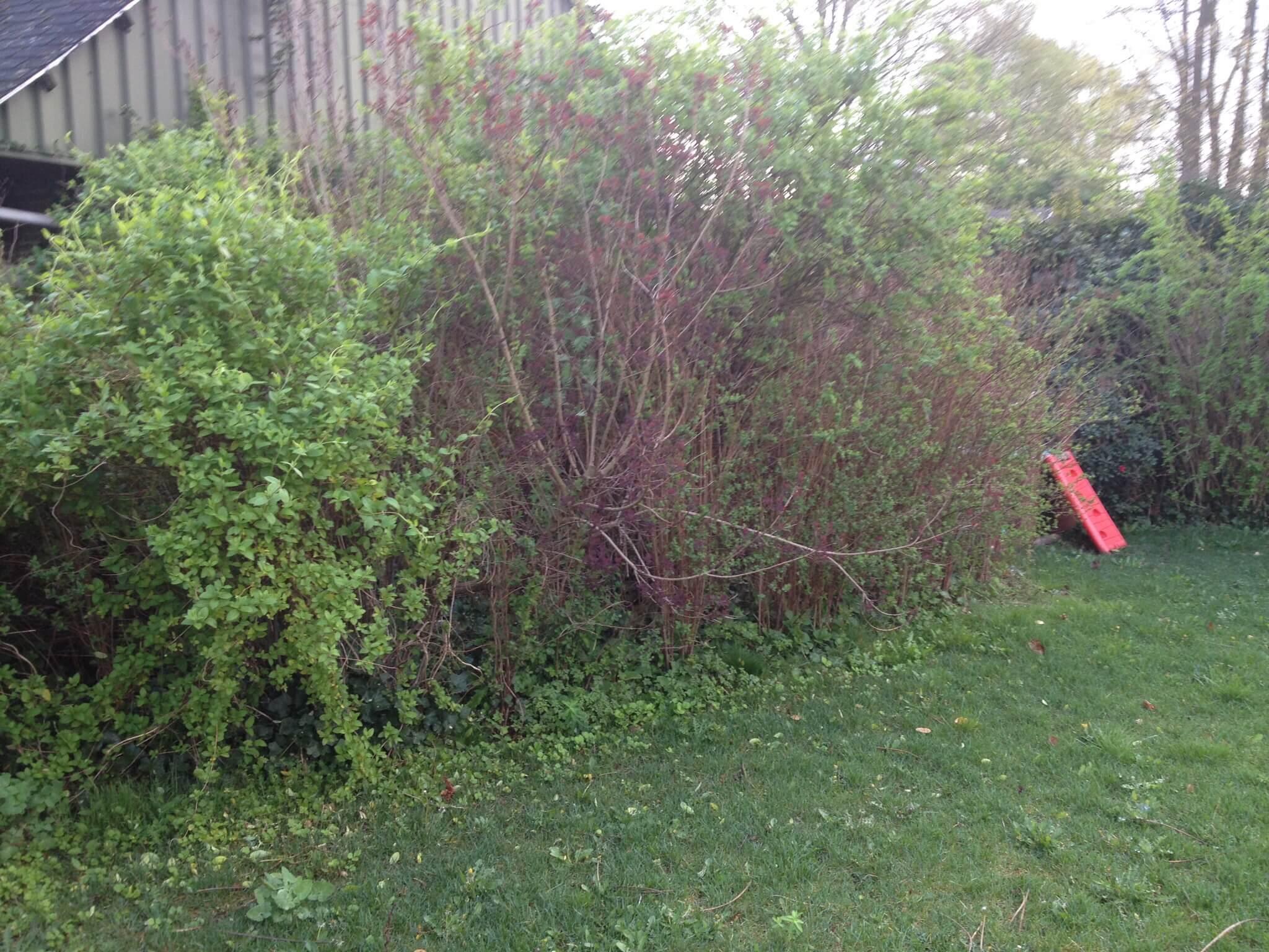 Opruimen tuin